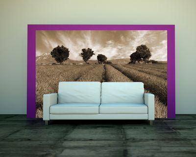 Fototapete - Lavendelfeld Provence - Frankreich – Bild 3