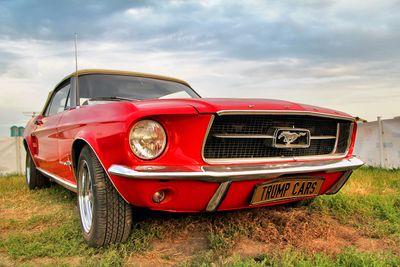 Fototapete - Mustang – Bild 2