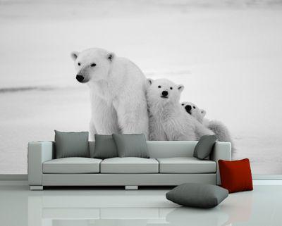 Fototapete Eisbären Familie – Bild 2
