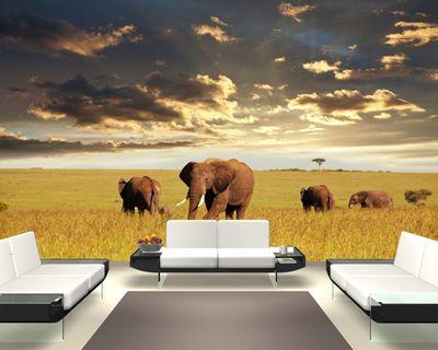 Fototapete Elefanten Herde – Bild 1