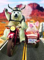 Riesen Geburtstag A4 Humor Grußkarte Googlies PopShot Born to be wild Motorrad A4