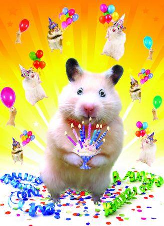 Riesen Geburtstag A4 Humor Grußkarte Googlies PopShot Happy Birthday Hamster A4