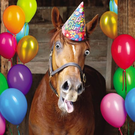 Geburtstag Humor Grußkarte Googlies PopShot Happy Birthday Bertie das Pferd 16x16cm