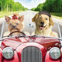 Geburtstag Humor Grußkarte Googlies PopShot Urlaub Hochzeit Hunde im Auto 16x16cm