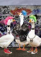 Geburtstag Humor Grußkarte Googlies Wackelaugen Punk Gänse 12x17cm