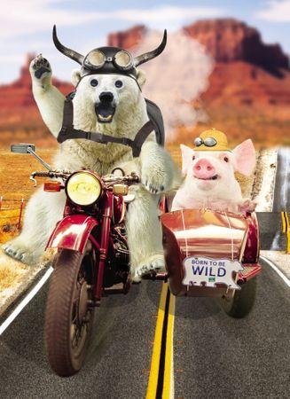 Geburtstag Humor Grußkarte Googlies Wackelaugen Born to be Wild Easy Rider 12x17cm