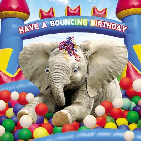 Geburtstag Humor Grußkarte Googlies Wackelaugen Have a Bouncing Birthday Elefant 12x17cm