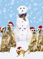 Riesen Weihnachten Humor Grußkarte Googlies Wackelaugen Eisbar mit Erdmännchen A4