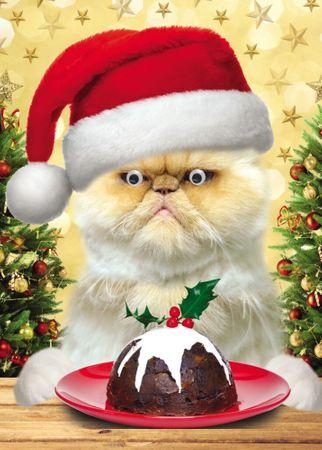 Weihnachten Humor Grußkarte Googlies Wackelaugen Katze mit Kuchen 12x17cm