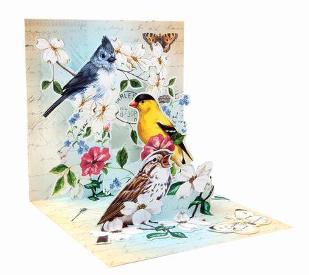 Pop Up 3D Karte Geburtstag Familie Vögel Natur 13x13cm