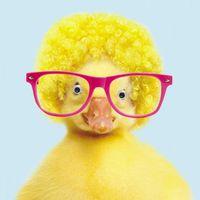3C1598 Gogglies Square Karte Cool Duck mit pinker Brille 16x16cm