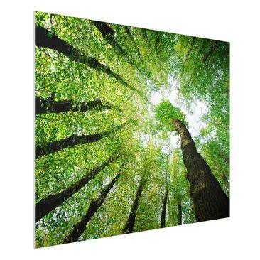 Produktfoto Forex Fine Art Print - Wandbild Bäume des Lebens - Quer 3:4