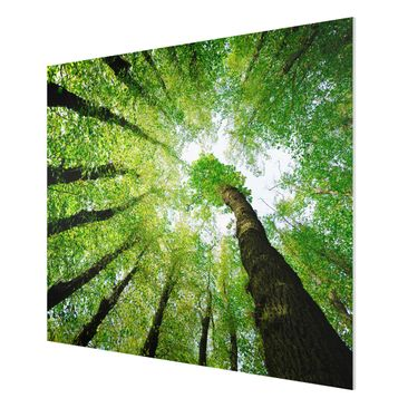 Product picture Forex Fine Art Print - Mural Trees Of...