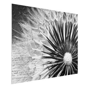 Produktfoto Forex Fine Art Print - Wandbild Pusteblume Schwarz & Weiß - Quer 3:4