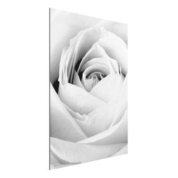 Produktfoto Aluminium Print - Wandbild Close Up Rose - Hoch 4:3