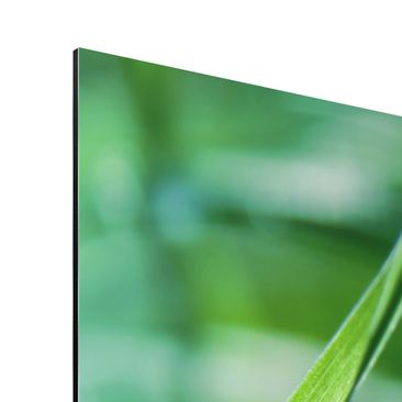 Product picture Aluminium Print - Mural Green Ambiance...