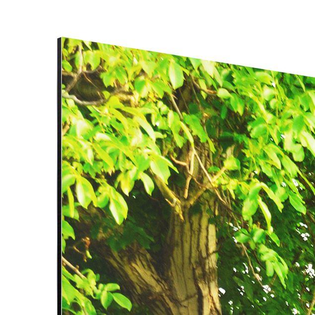 Produktfoto Aluminium Print - Wandbild Sommerwiese - Quer 3:4