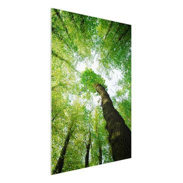 Produktfoto Forex Fine Art Print - Wandbild Bäume...