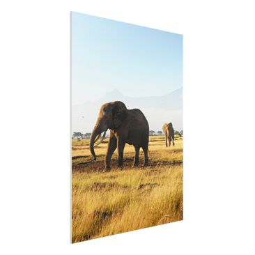 Immagine del prodotto Stampa su Forex - Elephants in front of the Kilimanjaro in Kenya - Verticale 4:3