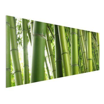 Produktfoto Forex Fine Art Print - Wandbild Bamboo Trees No.1 - Panorama Quer
