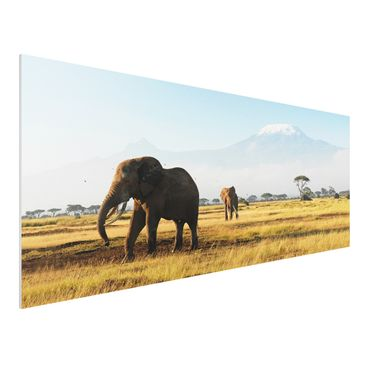 Immagine del prodotto Stampa su Forex - Elephants in front of the Kilimanjaro in Kenya - Panoramico