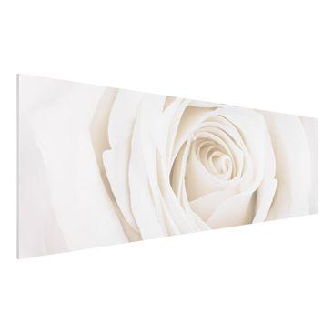 Immagine del prodotto Stampa su Forex - Pretty White Rose - Panoramico