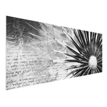 Produktfoto Forex Fine Art Print - Wandbild Pusteblume Schwarz & Weiß - Panorama Quer