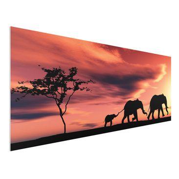 Immagine del prodotto Stampa su Forex - Savannah Elefant Family - Panoramico