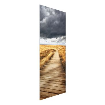 Immagine del prodotto Stampa su Forex - Pathway Through The Dunes - Pannnello