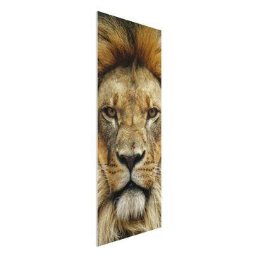 Produktfoto Forex Fine Art Print - Wandbild Wisdom of Lion - Panorama Hoch