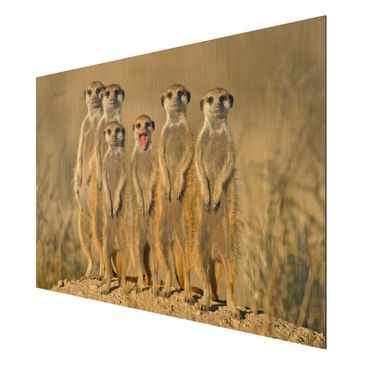 Product picture Aluminium Print brushed - Mural Meerkat...