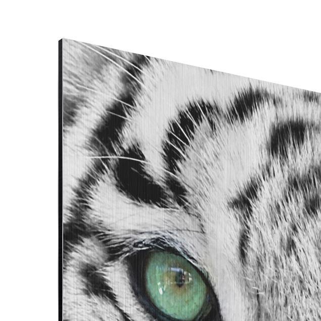 Produktfoto Aluminium Print gebürstet - Wandbild Weißer Tiger - Hoch 4:3