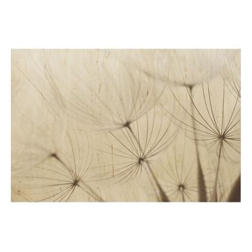 Product picture Wood Print - Gentle grasses - Wide 2:3