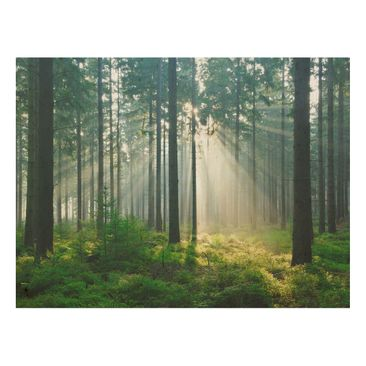 Product picture Wood Print - Enlightened Forest - Wide...