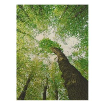 Product picture Wood Print - Trees of life - High 4:3
