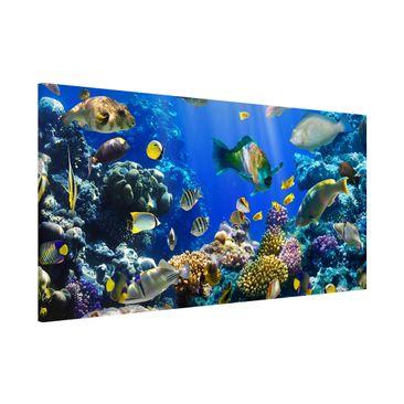 Produktfoto Magnettafel - Underwater Reef - Memoboard Panorama Quer