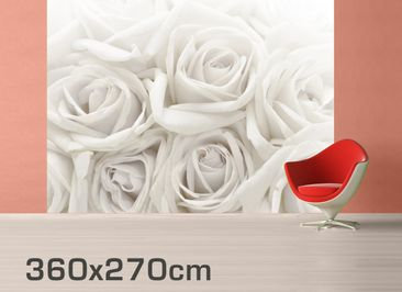Product picture Photo Wall Mural White Roses