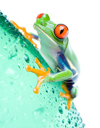 Immagine del prodotto Decorazione per finestre Frog
