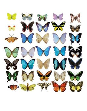 Product picture Window Sticker no.51 Butterflies Set II