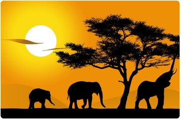 Product picture Wall Mural African Elefant Walk