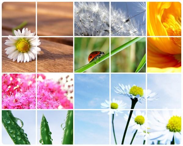 Produktfoto Selbstklebendes Wandbild Spring Impressions