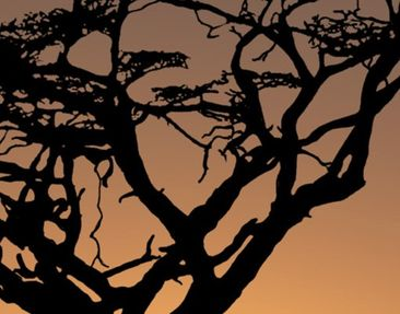 Product picture Wall Mural African Sunset