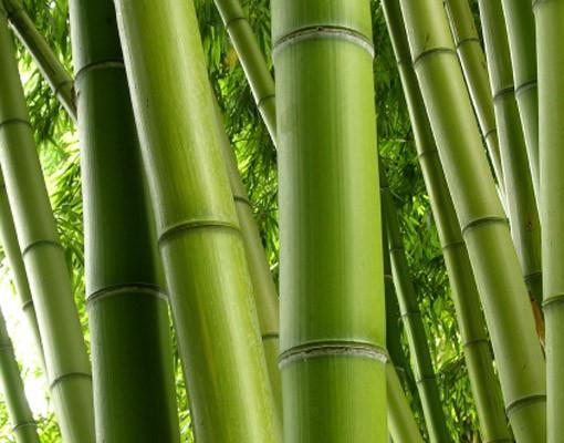 Produktfoto Selbstklebendes Wandbild Bamboo Trees