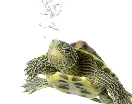Produktfoto Selbstklebendes Wandbild Turtle
