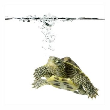 Product picture Window Mural Turtle