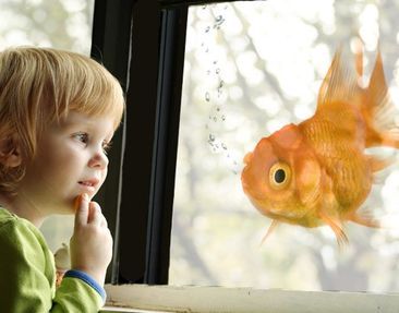 Product picture Window Mural Goldfish