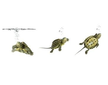 Product picture Wall Mural Turtle Trio