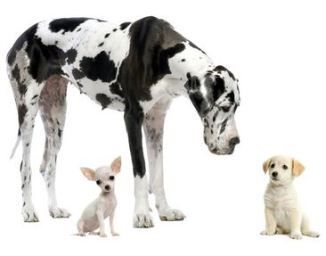 Product picture Wall Decal no.87 Dog Meeting
