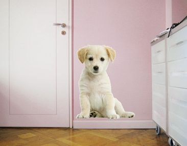 Produktfoto Wall Decal no.94 Sweet White Dog II