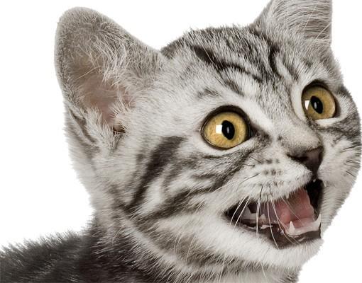 Produktfoto Wandtattoo Katze No.132 Miez